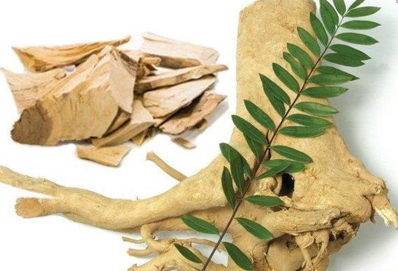 Dùng cây mật nhân ngâm rượu mang lại một bài thuốc quý đối với sức khỏe con người