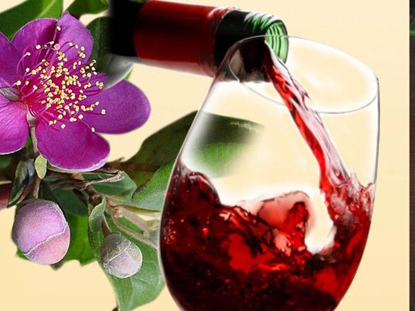 Cách ngâm rượu sim tốt cho sức khỏe - Quả sim ngâm rượu