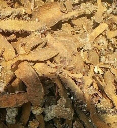 Nấm ngọc cẩu ruột vàng